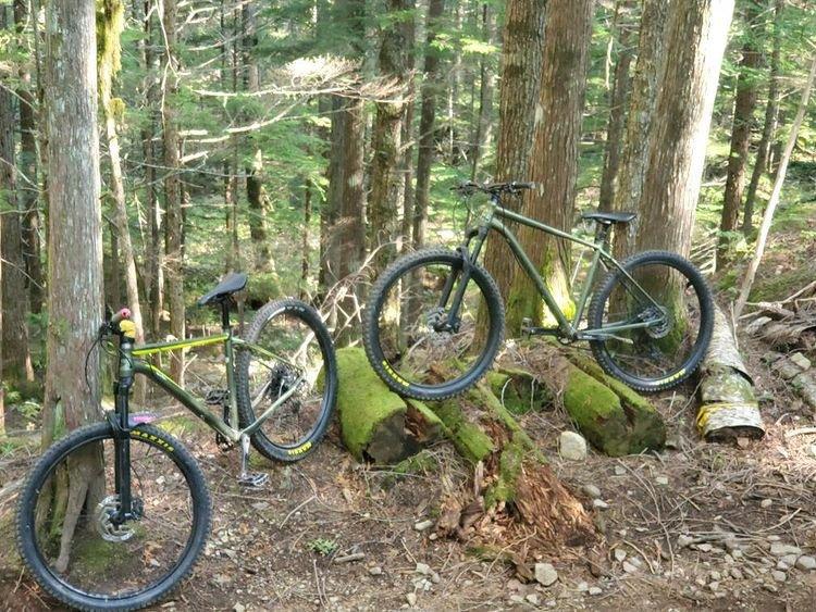 Revelstoke Cedars